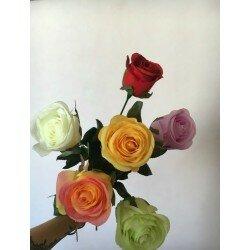 Ветка розы 3114
